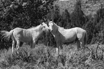 Photograph - Wild Horses With Playful Spirits No 1 Bw by Belinda Greb