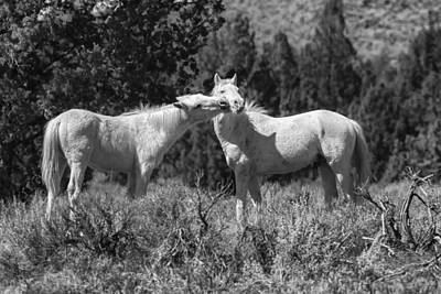 Photograph - Wild Horses With Playful Spirits No 3 Bw by Belinda Greb