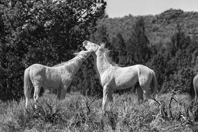 Photograph - Wild Horses With Playful Spirits No 5 Bw by Belinda Greb