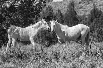 Photograph - Wild Horses With Playful Spirits No 6 Bw by Belinda Greb