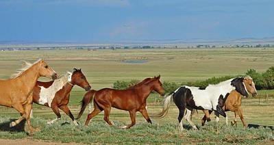Barnyard Digital Art - Wild Horses Wyoming by Heather Coen