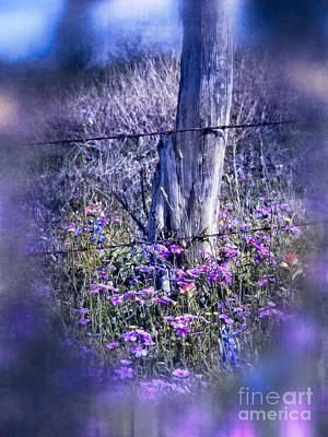 Photograph - Wild In The Country 2.0 by Ella Kaye Dickey