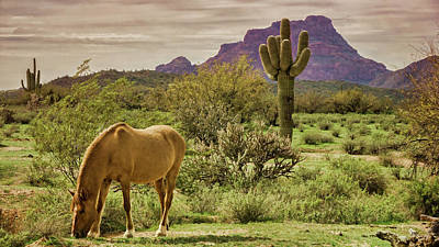 Photograph - Wild In The Sonoran  by Saija Lehtonen