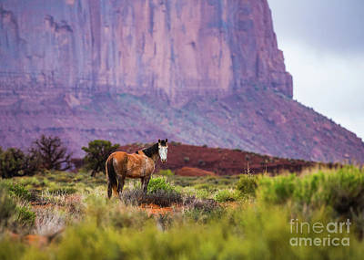 Photograph - Wild In The Valley by Anthony Michael Bonafede