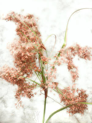 Photograph - Wild Indian Rice In Autumn by Louise Kumpf