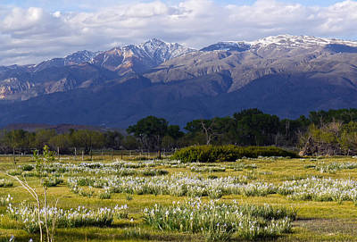 Photograph - Wild Iris And The White Mountains by Frank Lee Hawkins Eastern Sierra Gallery