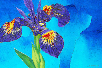 Painting - Wild Iris Art By Sharon Cummings by Sharon Cummings