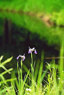 Target Threshold Nature - Wild Iris by the Pond Portrait by Gwen Gibson