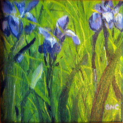 Wild Iris Art Print by Susan Coffin