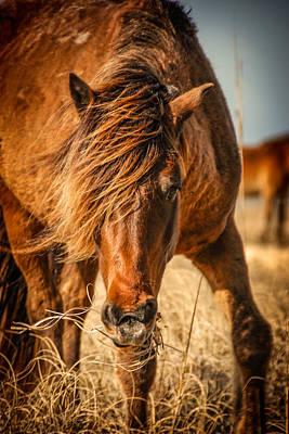 Photograph - Wild by Joye Ardyn Durham