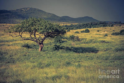Photograph - Wild Kenya by Cami Photo