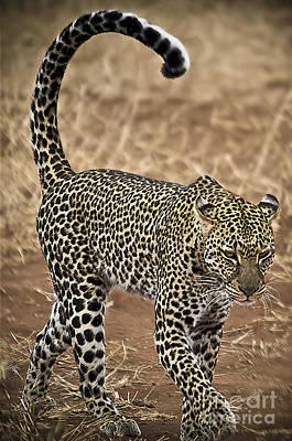 Wild Lady Art Print by Alessandro Giorgi Art Photography