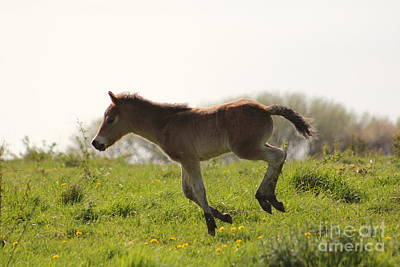 Photograph - Wild Horses 3 by Four Hands Art