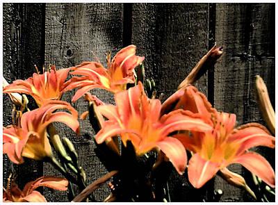 Wild Lily's Art Print by Richard N Watkins