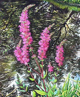 Wild Flowers Drawing - Wild Loosestrife by Christopher Ryland