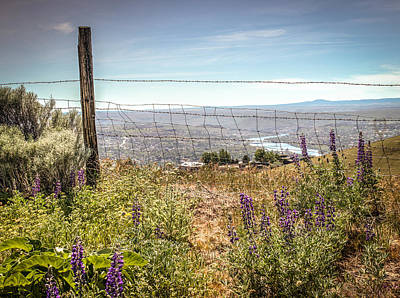 Wild Lupines On The Hill. Art Print