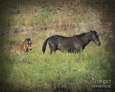 Photograph - Wild Mama With Foal by Bobbee Rickard
