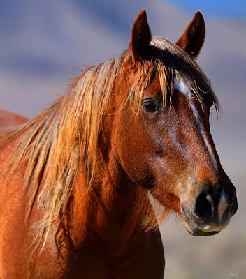 Photograph - Wild Mare Portrait by Greg Norrell