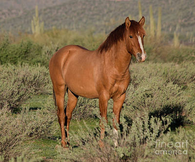 Photograph - Wild Mare by Teresa Wilson