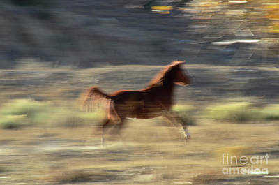 Photograph - Wild Motion by Debby Pueschel