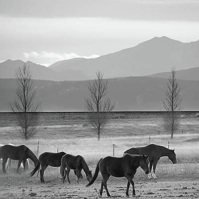 Photograph - Wild Mountain Horses - Rocky Mountains Colorado - Black And White Square by Gregory Ballos