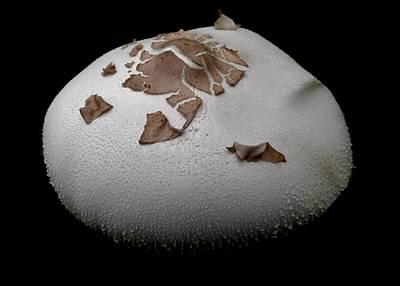 Photograph - Wild Mushroom by Amar Sheow