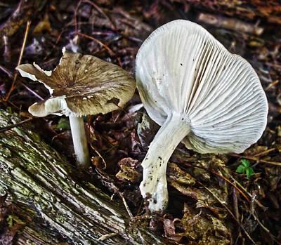 Photograph - Wild Mushroom by Joan Reese