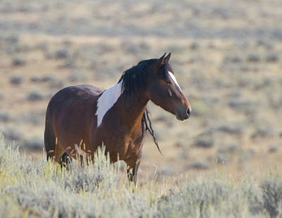 Photograph - Wild Mustang 1 by Chris LeBoutillier