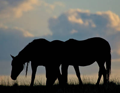Photograph - Wild Mustang 8 by Chris LeBoutillier