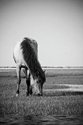 Animals Photos - Wild Mustang by Bob Decker