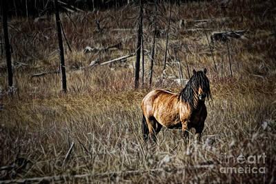 Photograph - Wild Mustang by Brad Allen Fine Art