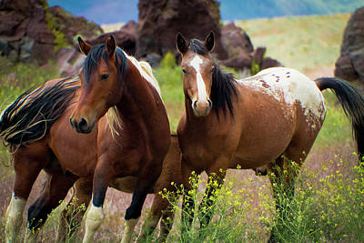 Photograph - Wild Mustang Brothers by Waterdancer