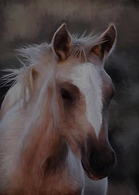 Digital Art - Wild Mustang Foal by Chris LeBoutillier