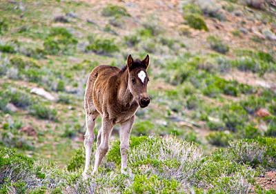 Photograph - Wild Mustang Foal by Waterdancer