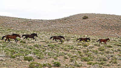 Photograph - Wild Mustang Herd Running by Waterdancer