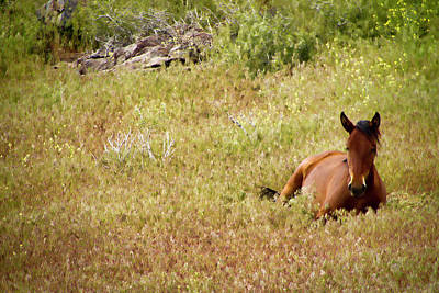Photograph - Wild Mustang In Springtime Grass by Waterdancer