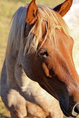 Photograph - Wild Mustang by Kate Purdy
