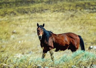 Photograph - Wild Mustang by LeeAnn McLaneGoetz McLaneGoetzStudioLLCcom