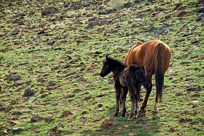 Photograph - Wild Mustang Mare And Foal by Waterdancer