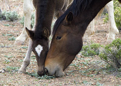 Horse Photograph - Wild Mustang Mare And Foal by Waterdancer