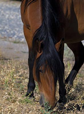 Photograph - Wild Mustang Mare Head Shot by Waterdancer