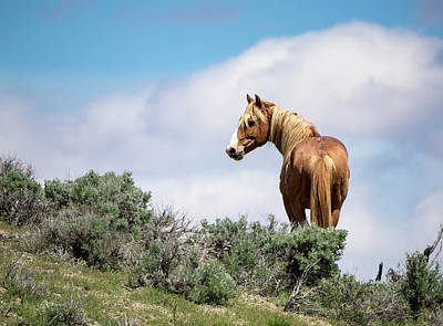 Photograph - Wild Mustang Stallion Of Sand Wash Basin by Nadja Rider