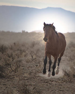 Photograph - Wild Mustang Stallion Running by Waterdancer