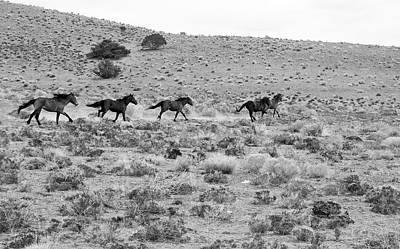 Photograph - Wild Mustang Stallions Running by Waterdancer