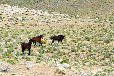 Photograph - Wild Mustang Stallions by Waterdancer