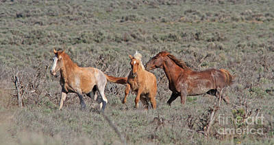 Photograph - Wild Mustangs by Gary Wing
