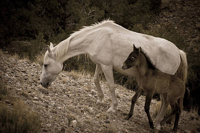 Wild Mustangs Of New Mexico 22 Art Print