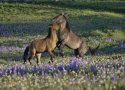 Photograph - Wild Mustangs Playing 2 by Roger Snyder