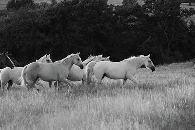 Photograph - Wild Mustangs by Vonda Barnett