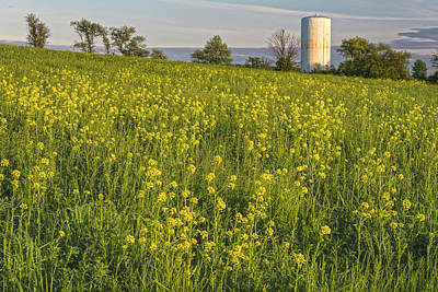 Photograph - Wild Mustard Fields And Silo by Angelo Marcialis